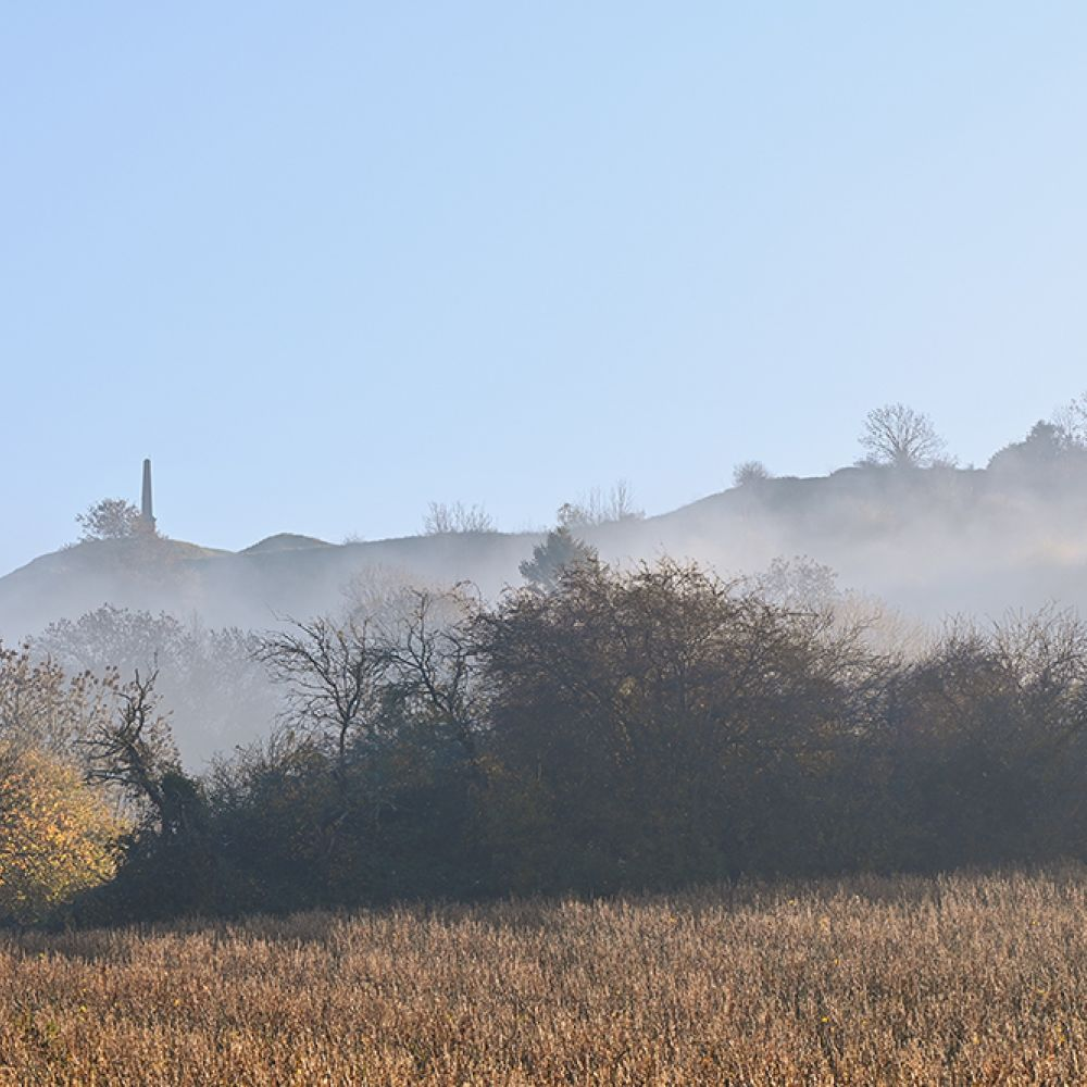 Ham Hill rises above the swirls of mist with rows of current bushes below
